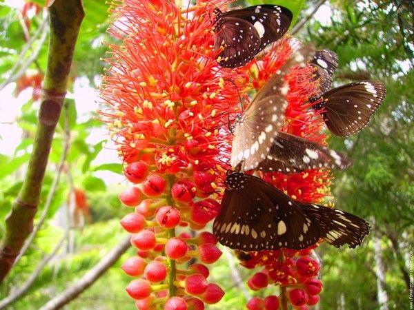 Jolie fleur et papillon centerblog - Papillon fleur ...